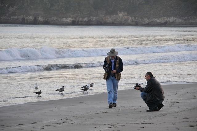 Birds watching photographers