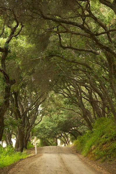 Tunnel of trees by chrisclare