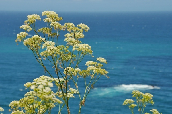 CentralCoast032 by chrisclare